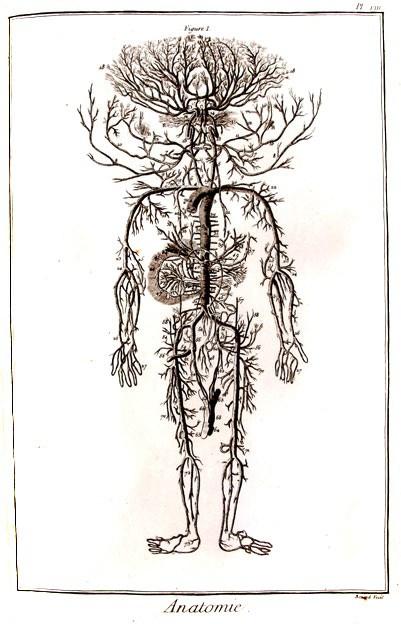 anatomie-systeme-sanguin