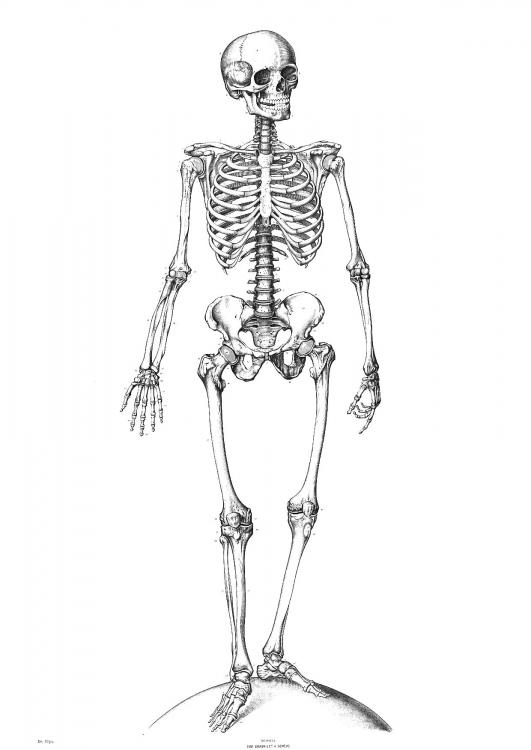 squelette-t9340