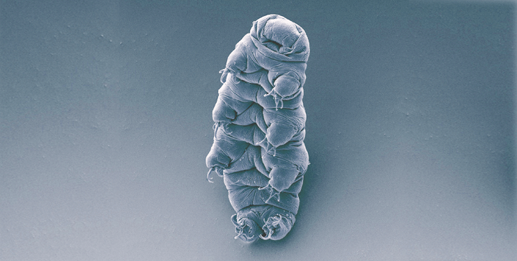 Tardigrade-Water-Bear-742x375